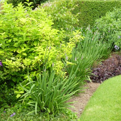 A front garden border for a client in Guildford. Full of promise ... agapanthus yet to bloomms