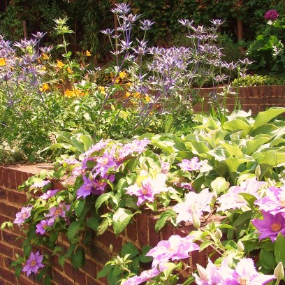This planting scheme was on chalk soil, and suitable plants selected.