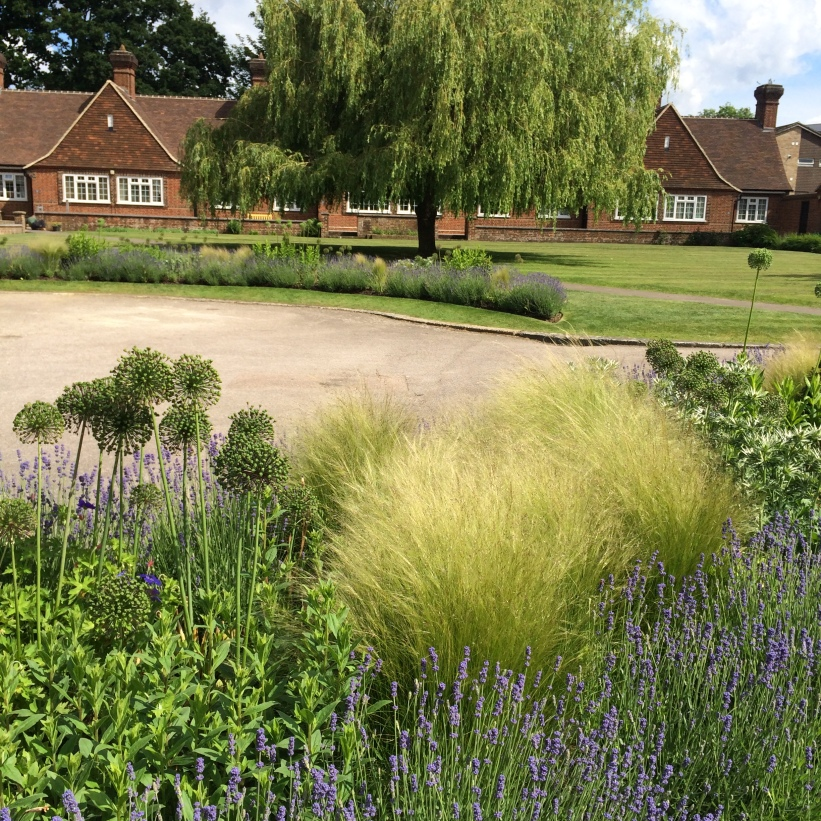 A planting design for Almshouses in Crawley
