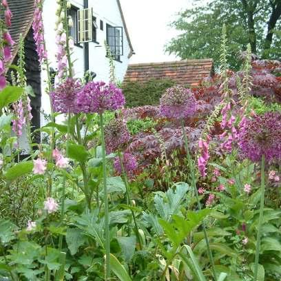 A cottage garden planting.